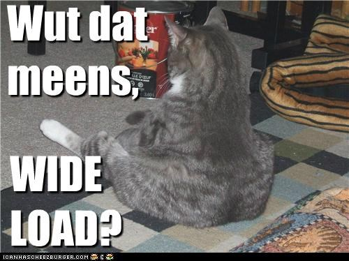caption captioned cat confused fat insult load meaning question what wide wide load - 5168637952