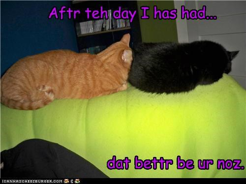 after bad day be better caption captioned cat Cats day innuendo nose tabby threat - 5169272064