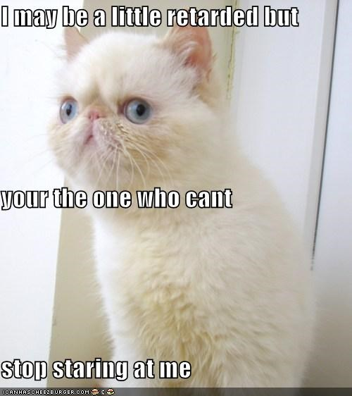 animals Cats cross eyed derp facts I Can Has Cheezburger retarded Staring wtf - 5169294848