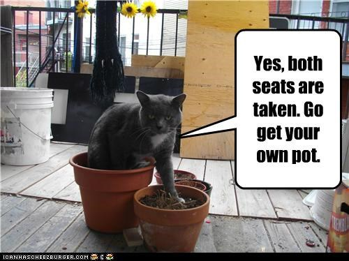 both caption captioned cat get go own pot pots seats taken your