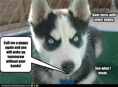 Call me a puppy again and you will wake up tommorow without your hands! Dont mess with anger puppy. See what I mean.