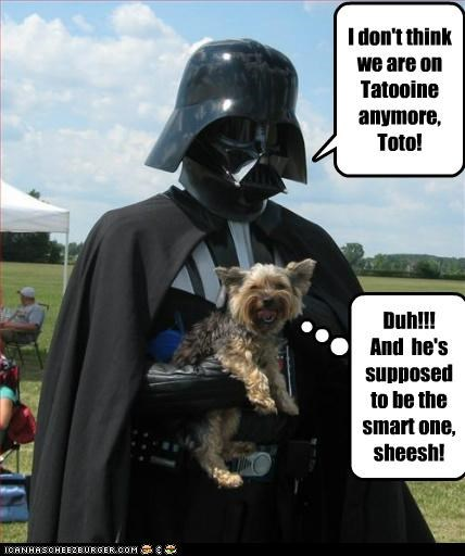 costume darth vader star wars yorkshire terrier - 5169878272
