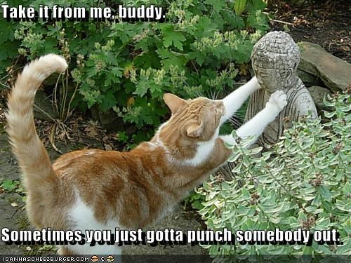 animals buddhism Cats I Can Has Cheezburger peace punching statues violence - 5169894400