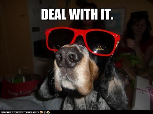 Deal With It,setter,sunglasses,whatbreed