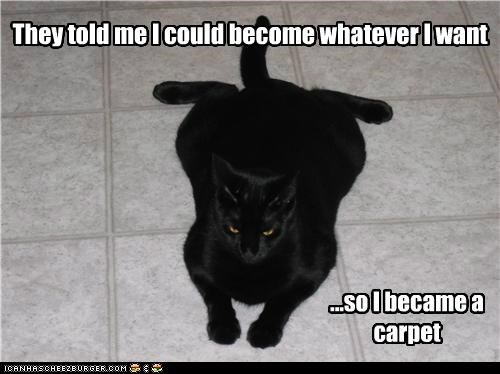 anything became become caption captioned carpet cat could meme so told - 5170292992