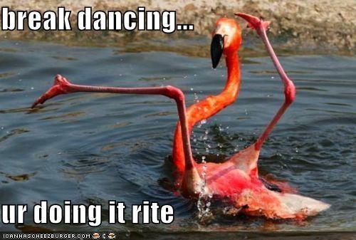 animals dancing doing it right flamingos I Can Has Cheezburger - 5170854656