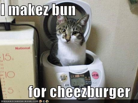 Cheezburger Image 5171034112
