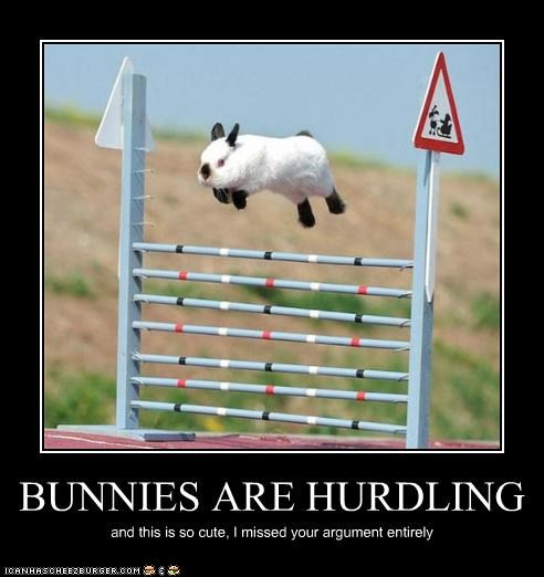 BUNNIES ARE HURDLING and this is so cute, I missed your argument entirely