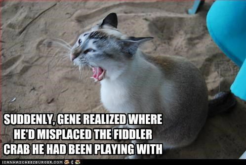 beach,caption,captioned,cat,crab,do not want,fiddler crab,location,misplaced,ow,pain,playing,realized,suddenly,where