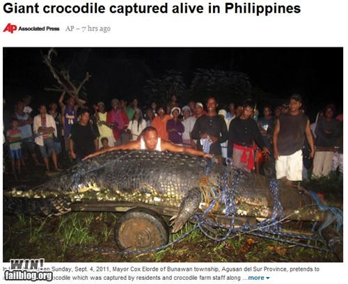 animal completely relevant news crocodile huge hunt