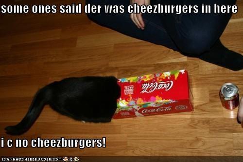 Cheezburger Image 5172190720
