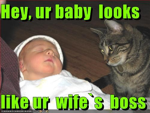 baby,boss,caption,captioned,cat,Hey,human,just saying,looks,resemblance,wife,your