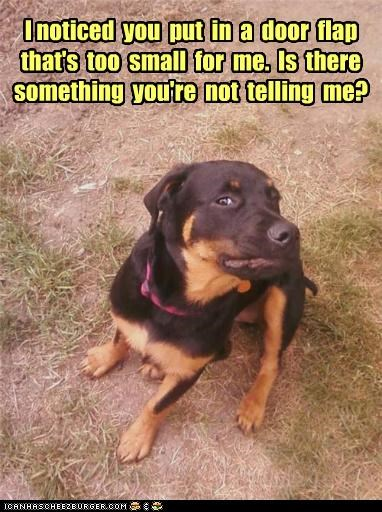 cat door flap mixed breed rottweiler suspicious what whatbreed - 5173010944