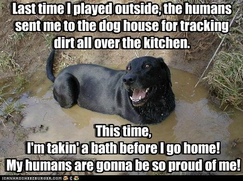 balck lab,bath,best of the week,dirty,happy,happy dog,labrador retriever,mud,muddy,proud,smiles,smiling