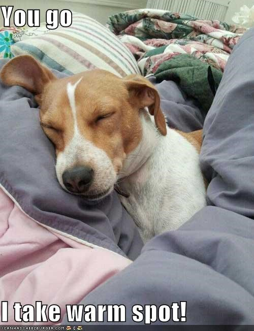 asleep,bed,blanket,blankets,nap,rest,sleep,sleeping,stay here,warm,warm spot,whatbreed,you go