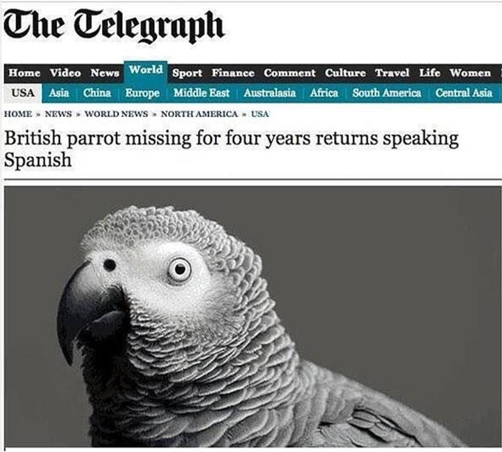 birds ducks Memes funny - 5173509