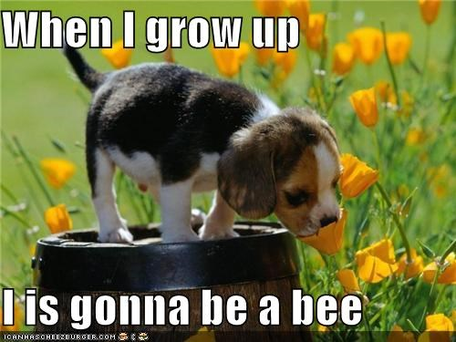 beagle,bee,flowers,outdoors,puppy,smelling,sniffing,sunny day