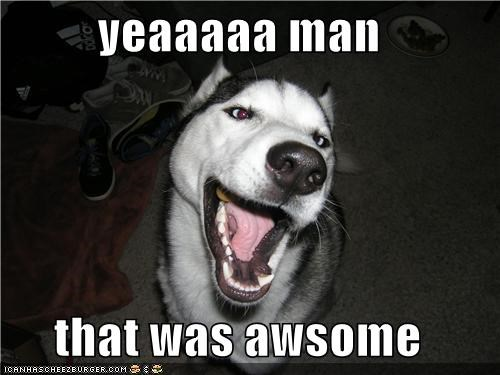 awesome,happy,happy dog,husky,smile,smiles,smiling,that was awesome