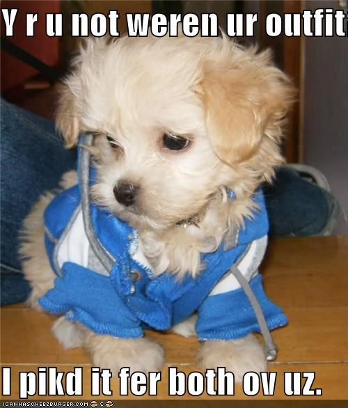 blue sweater,clothes,clothing,fashion,matching,puppy,style,sweater,whatbreed