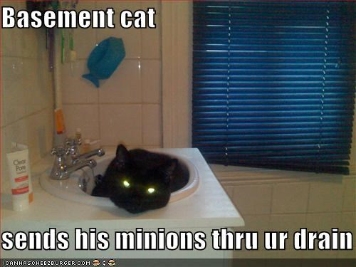 basement cat bathroom black eyes glowing lolcats sink - 517378816