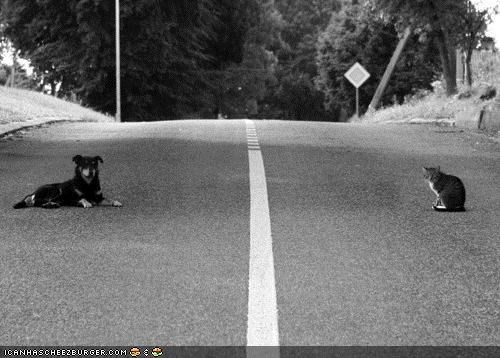 dogs,goggies,goggies r owr friends,Interspecies Love,lines,road,separated,street