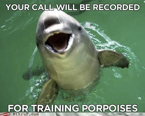 Hall of Fame porpoise pun training your call will be recorded - 5174235648