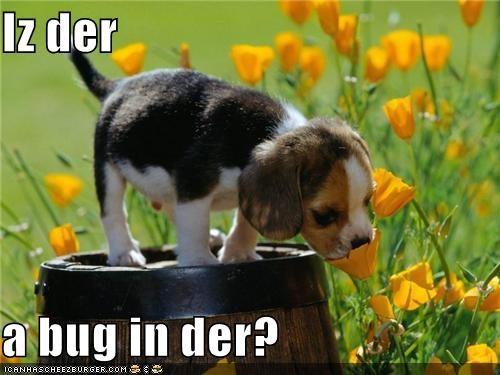 Cheezburger Image 5174942720