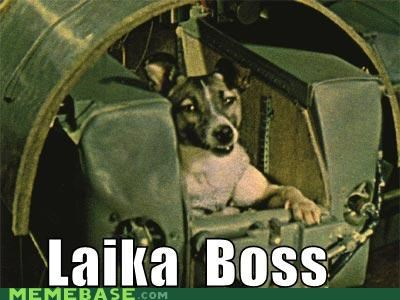 animemes,dogs,laika,Like a Boss,russia,space