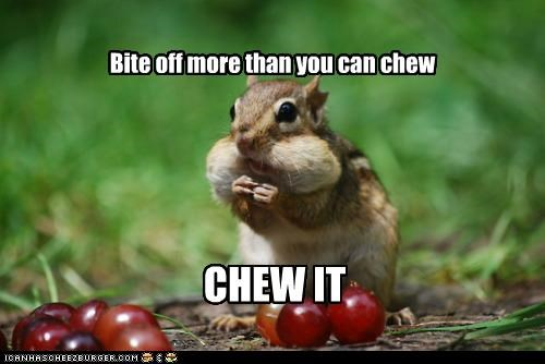 animals cheeks chewing chipmunks Courage Wolf food grapes I Can Has Cheezburger Memes - 5175147008
