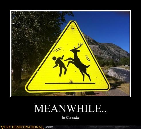 Canada,fight,Pure Awesome,reindeer,wtf