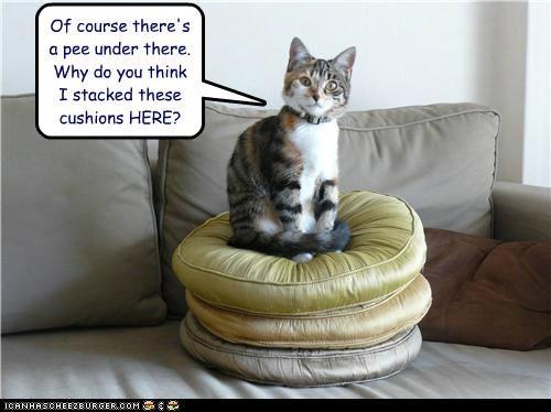 animals Cats cushions I Can Has Cheezburger pee - 5175712000