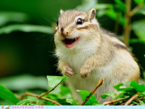 chipmunk definition face giddy Hall of Fame happiness happy smile wide wide eyed