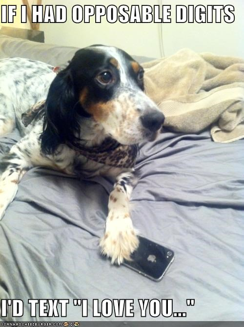 english setter,i love you,iphone,love,technology,texting,whatbreed