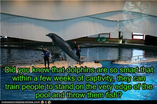 animals caption captioned dolphin dolphins I Can Has Cheezburger intelligent just capshunz smart trainers - 5176310016