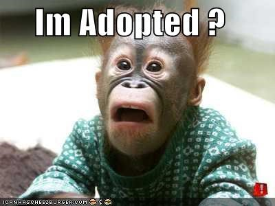 adopted,animals,apes,I Can Has Cheezburger,orangutan,shocked,sweaters