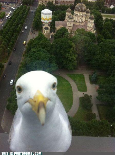animal Animal Bomb best of week bird overlook window - 5176718592