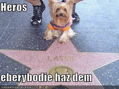 happy dog hero hollywood hollywood star Hollywood Walk of Fame lassie silky terrier smiles - 5176811264