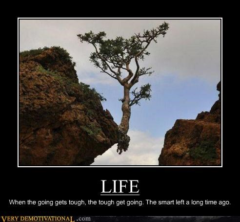 hilarious,life,smart,tough,tree
