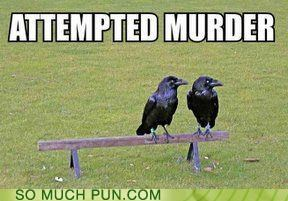 attempted crow crows double meaning Hall of Fame homophone literalism murder murder of crows - 5177366784
