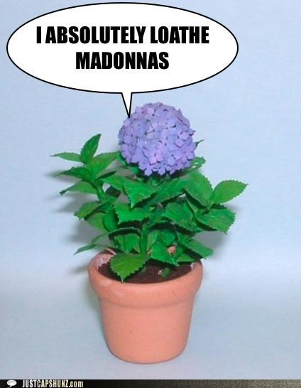 flowers,hatred,hydrangeas,I Can Has Cheezburger,loathe,Madonna,musicians,quotes