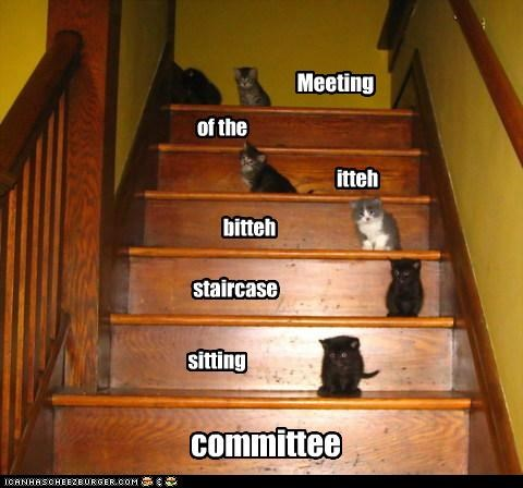 caption captioned cat Cats itteh bitteh kitteh committeh kitten meeting sitting staircase - 5177501952