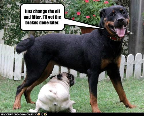 friends fun mechanic oil change playing pug rottweiler smiling smiling dog - 5178538496