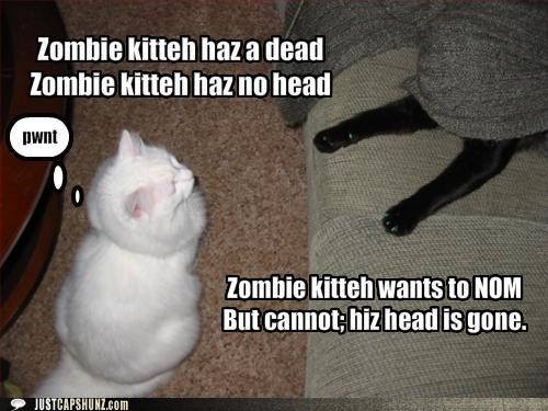 animals Cats I Can Has Cheezburger site news ugs zombie - 5178564608