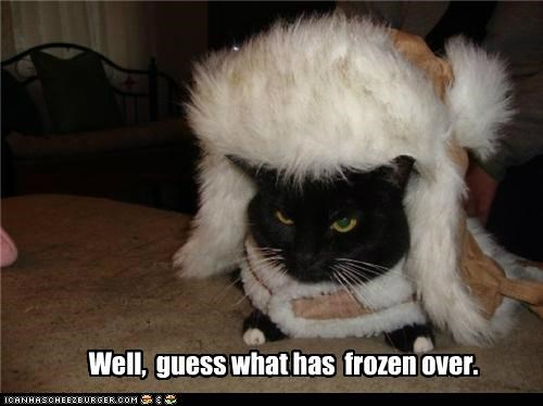 bundled up caption captioned cat frozen guess has hat over well what