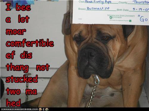 Cheezburger Image 5178912256