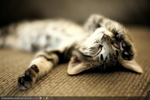 Caturday,cyoot kitteh of teh day,paws,relaxing,sleeping,tired