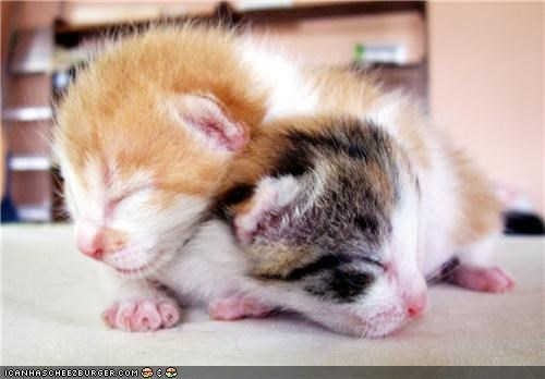 cyoot kitteh of teh day,newborn,sleeping,stackable,tiny,two cats