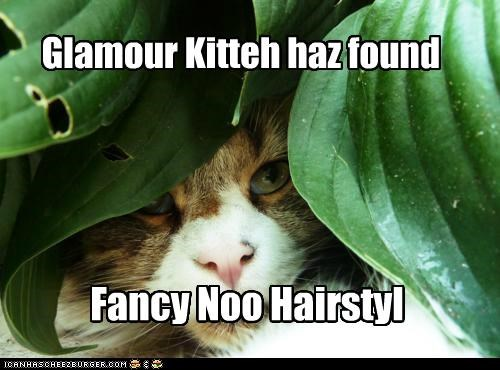 Glamour Kitteh haz found Fancy Noo Hairstyl