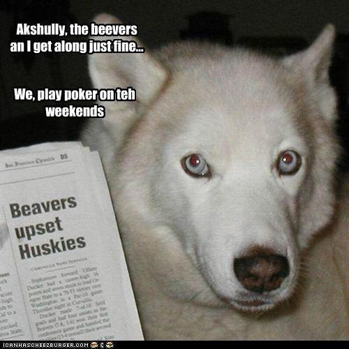 actually,akshully,beavers,correction,friends,husky,newspaper,not true,poker