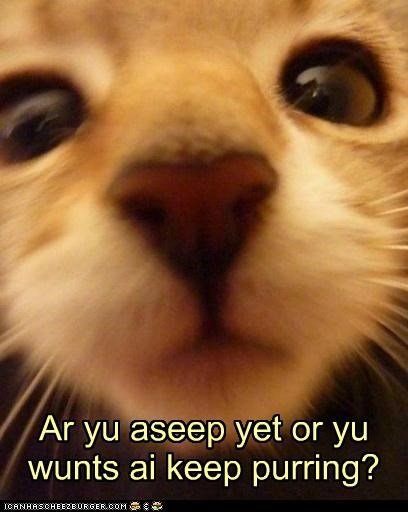 alternative,are,asleep,best of the week,caption,captioned,cat,closeup,face,Hall of Fame,keep,purring,question,yet,you